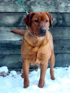 Amber Red Lab