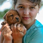 Labrador Puppies MN-4