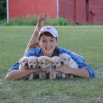 Labrador Puppies MN-5