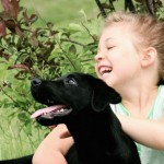 Labrador Puppies MN-9