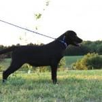 LadyxTucker black puppies-4