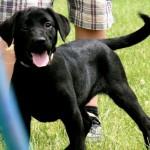 LadyxTucker black puppies-7