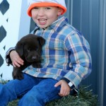 chocolate labs for sale mn-2