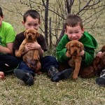 Our boys with the new puppies